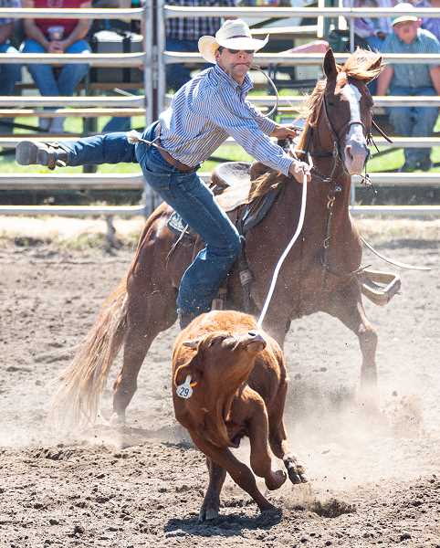 CENTRAL OREGONIAN - Indigo Sappington jumps off his horse to engage a roped calf during the 2019 Paulina Rodeo. The event in the high country, one of Oregon's most famous little rodeos, isn't letting the pandemic shut it down. Side events will be held Thursday and Friday, with the rodeo Saturday and Sunday.