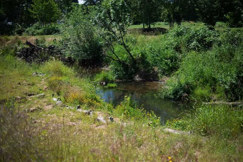 PMG PHOTO: ANNA DEL SAVIO - Restoration projects have been completed along the Scappoose Creek, including the portion that flows along Veterans Park.
