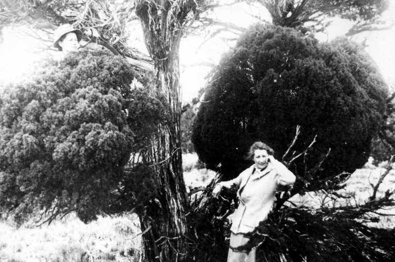 PHOTO COURTESY OF BOWMAN MUSEUM  - Beatrice McConnell, at left behind a branch and Harriet Bixby right are photographed at Imperial 1912.