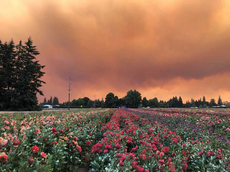 COURTESY PHOTO: NOEL WOOD - The view of the skies from Swan Island Dahlias in Canby Tuesday, Sept. 8.
