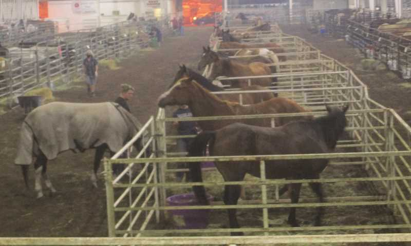 PMG PHOTO: DEBORAH GUINTHER - The fairgrounds in Canby is just about at capacity for evacuation horses, though the yellow parking lot can be used with a little help from horse owners.