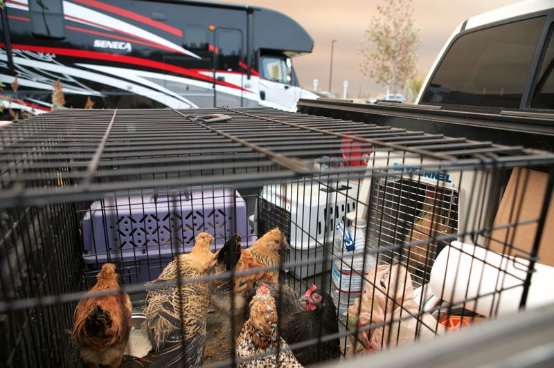 PMG PHOTO: JAIME VALDEZ - Rob Staub and his family live on Strawberry Lane and were told last night to evacuate their home in Scholls. They were able to leave with their Freightliner RV, truck, boat and their chickens and are parked at Mountainside High School.