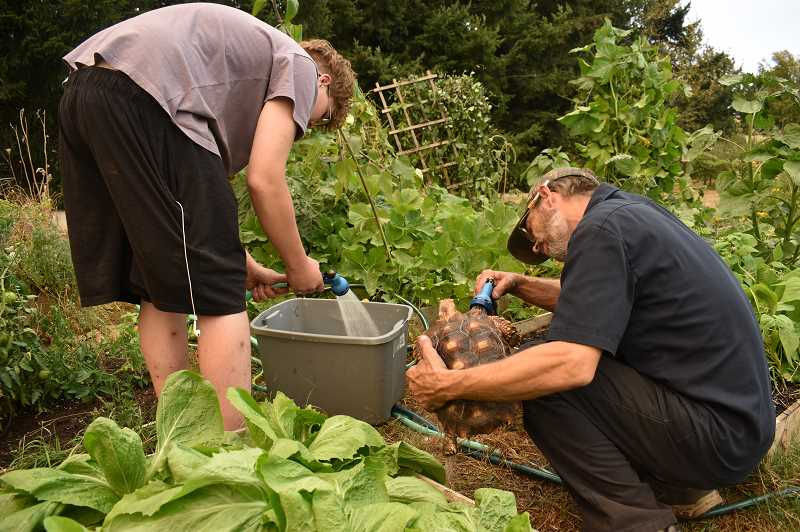 PMG PHOTO: RAYMOND RENDLEMAN - Estacada evacuee Brent Dow helps his son Jaydon clean their family's two tortoises Fred and Wilma at the community gardens on CCC's Oregon City campus, where a renter offered them the use of hoses and lettuce for their animals.