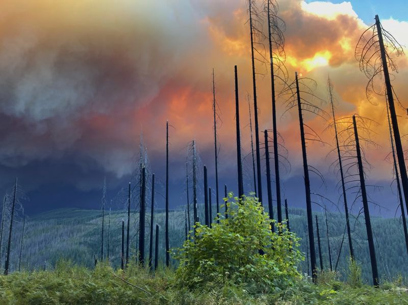 COURTESY PHOTO: U.S. FOREST SERVICE - The Riverside fire is pictured from La Dee Flats on Wednesday, Sept. 9.