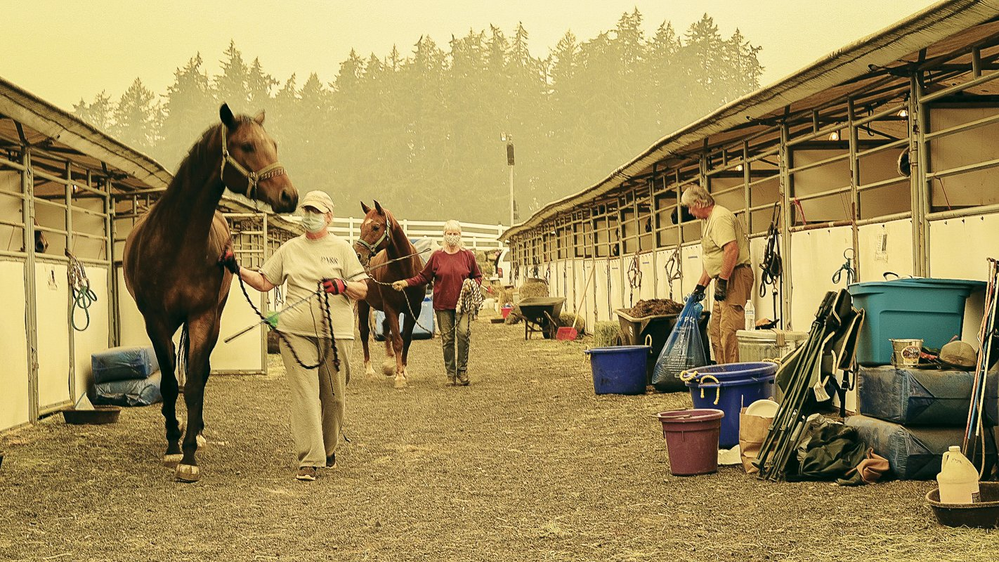 PMG PHOTO: COLIN HYATT - The DevonWood Equestrian Center east of Newberg has taken in hundreds of horses and other farm animals that were evacuated from fire zones in northwestern Oregon.