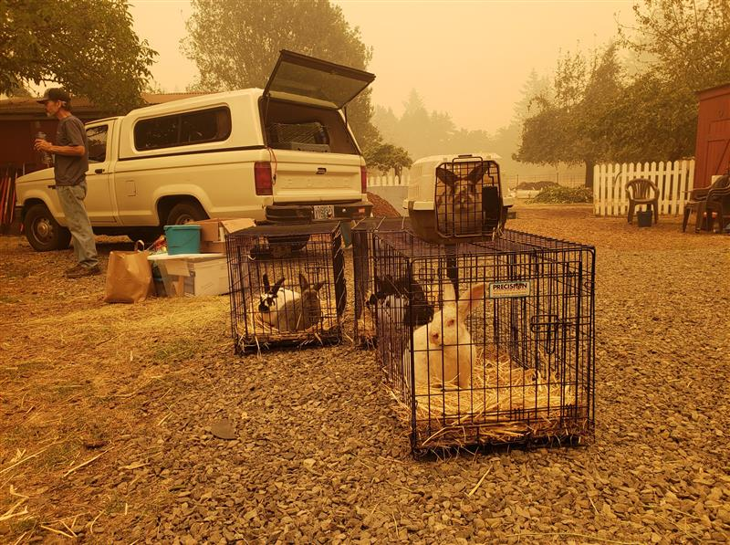 COURTESY PHOTO - Rabbits are ready for evacuation at Out to Pasture animal sanctuary earlier this week.