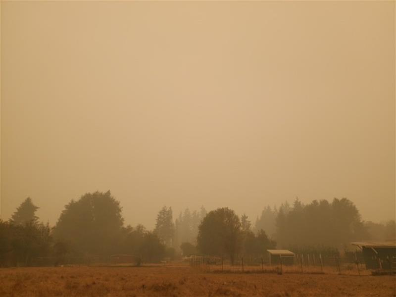 COURTESY PHOTO - Skies were hazy over Out to Pasture earlier this week because of the wildfires burning near Estacada. Animals have been evacuated from the animal sanctuary .