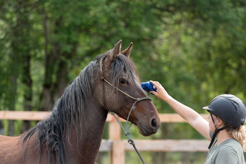 COURTESY PHOTO - Trainer Macy Montgomery brushes Annie Oakley's face. Annie Oakley will live out her days as a domestic horse after being taken from a wild herd of mustangs in Oregon, which has an unsustainably large mustang population.