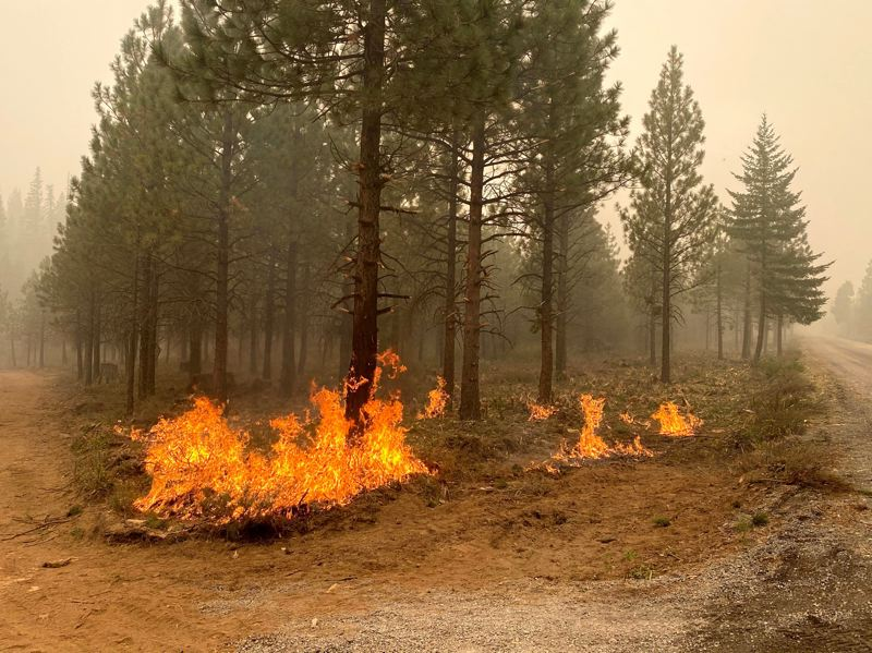 COURTESY PHOTO: TIM BOYCE - Strategic firing operations to remove unburned vegetation between the control line and active fire are used to reinforce control lines.