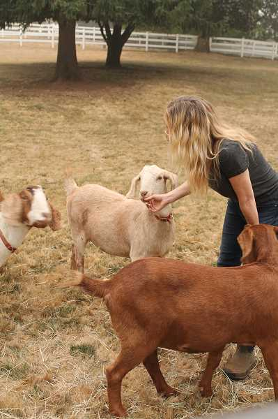 PMG PHOTO: HOLLY BARTHOLOMEW - Lisa Battan has taken in goats, llamas, pigs and more animals that were evacuated from wildfires.