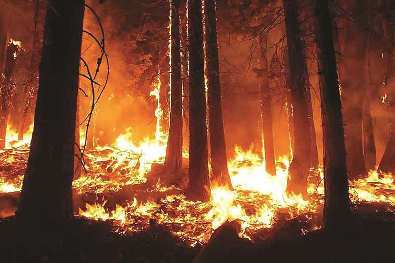 PMG FILE PHOTO - Investigators from Tualatin Valley Fire & Rescue have determined the Bald Peak/Chehalem Mountain fire started in an illegal campfire on private property in the area of the blaze. A burn ban had been in effect in western Oregon for more than a month when the fire erupted on Sept. 8.