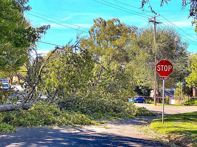 PAIGE WALLACE - A tree fell into Eastmoreland the intersection at S.E. 29th Avenue and Knapp Street, taking down an overhead cable, and blocking much of the road. The intersection remained taped off into Tuesday afternoon, to keep out foot and car traffic.