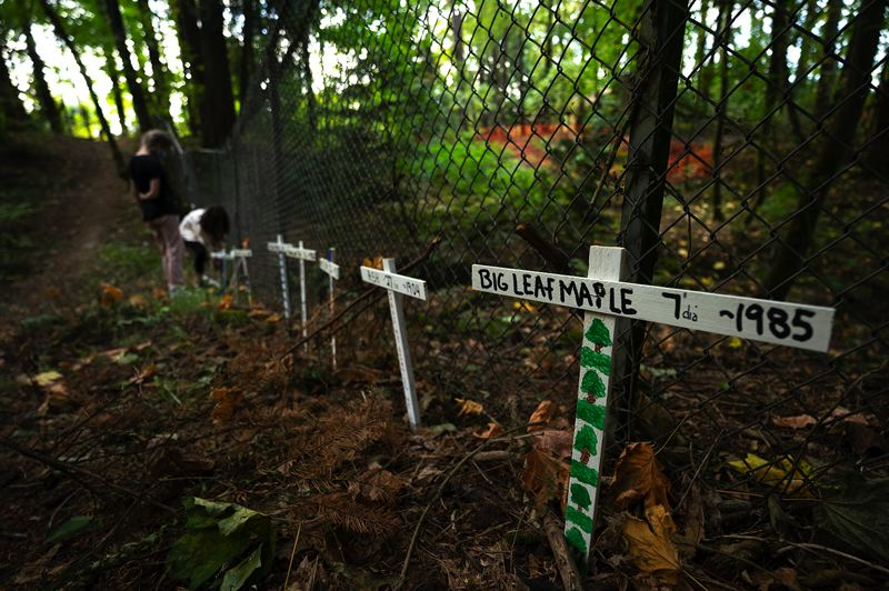 PMG PHOTO: CLARA HOWELL  - The crosses were placed along the trail in Hallinan Woods and near the property that is slated for development.