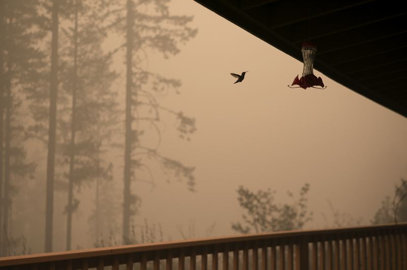 PMG PHOTO: JAIME VALDEZ - A hummingbird flies along John Hil's property as smoke lingers from the Riverside Fire.