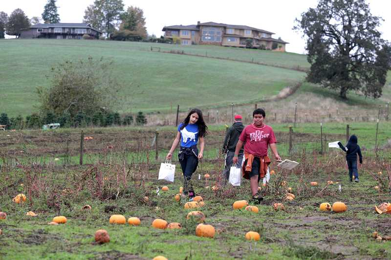 PMG FILE PHOTO - Barnes Elementary fifth graders look for pumpkins at Plumper Patch and Tree Farm. The farm has been working to get the farm ready to open for pumpkin season for the last several months.