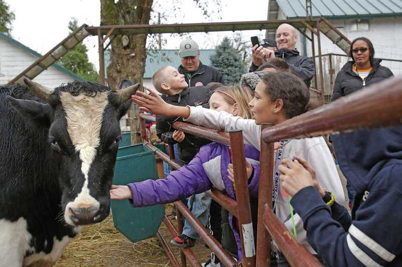 PMG FILE PHOTO - Barnes Elementary School fifth-graders pet a cow at a Pumpler Patch and Tree Farm near Hillsboro. The farm will provide a one-way animal looop this year due to COVID-19.