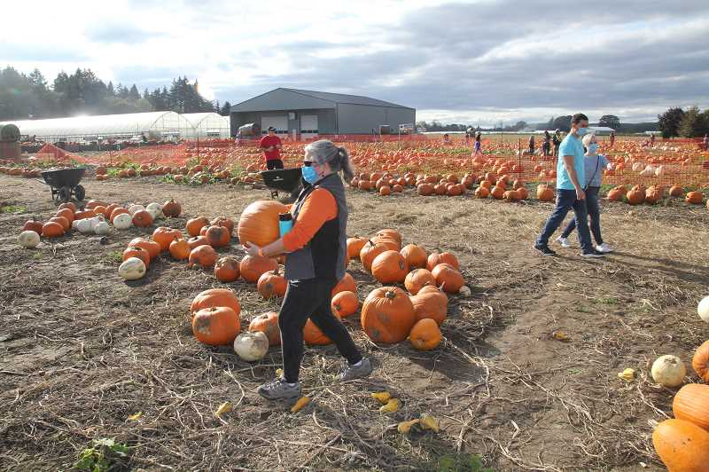 PMG PHOTO: JUSTIN MUCH - Getting some exercise at the pumpkin patch: Bauman's Farm and Garden in Gervais in Gervais was a busy place Friday afternoon, Oct. 16, as many made the country drive for pumpkins and fall fun.