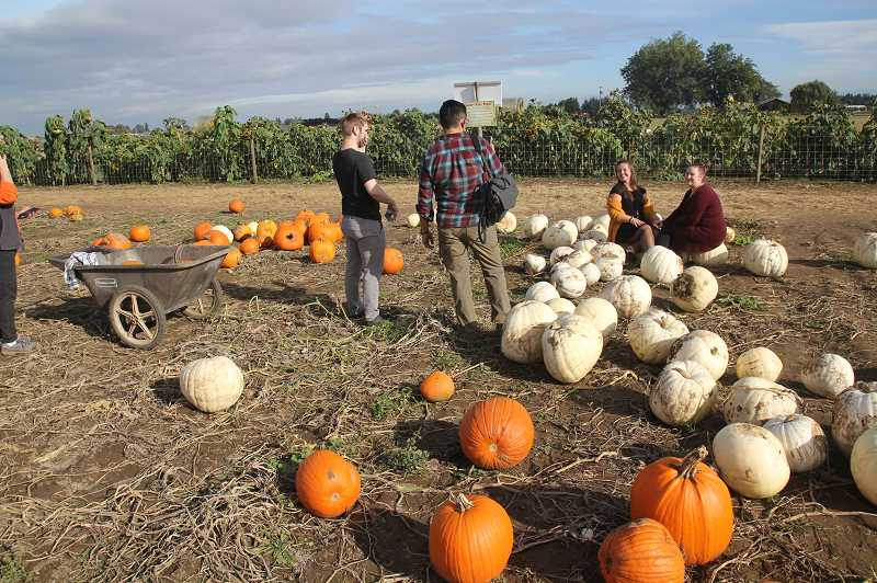 PMG PHOTO: JUSTIN MUCH - Photo op at the white pumpkin spot: Bauman's Farm and Garden in Gervais  was a popular place Friday afternoon, Oct. 16, as many made the country drive for rural, autumnal activity.