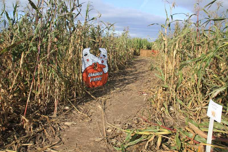 PMG PHOTO: JUSTIN MUCH - While Harvest Festival activities at Bauman's Farm and Garden in Gervais have been curbed by the coronavirus, the corn maze and pumpkin patch are open this year.