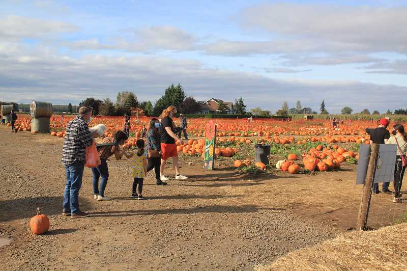 PMG PHOTO: JUSTIN MUCH - Bauman's Farm and Garden in Gervais is keeping as much activity available as possible, including its pumpkin patch and corn maze, during the cornavirus-tainted 2020 fall.