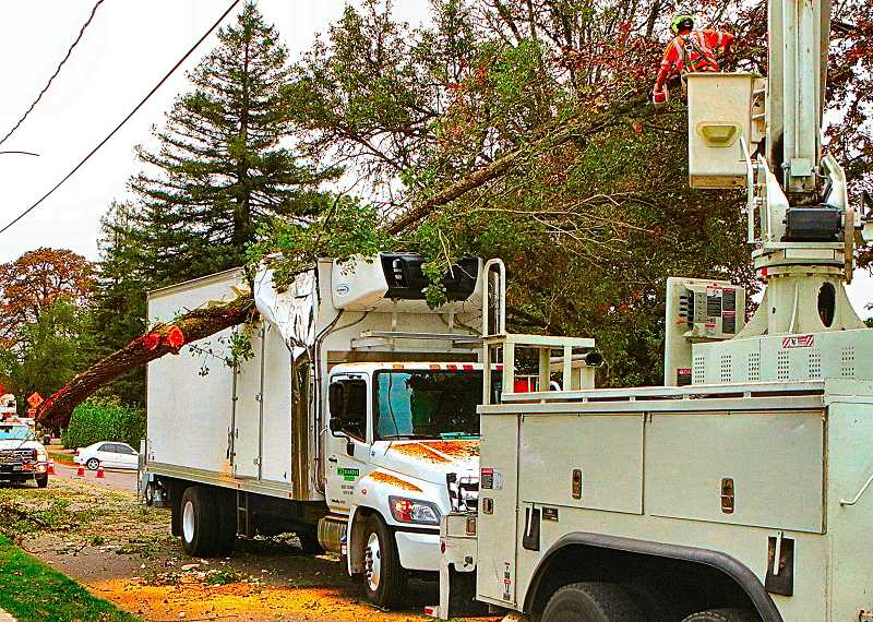 DAVID F. ASHTON - S.E. 13th Avenue was closed on the Bybee Curve in Westmoreland, while workers toiled to extract the huge, torn-off overhanging tree limb from inside the front top corner of a local delivery truck.