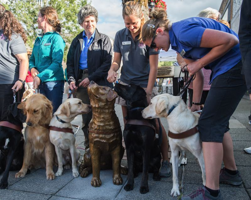 PMG FILE PHOTO - Guide Dogs with the Blind celebrated the unveiling of Driscoll in downtown Gresham.