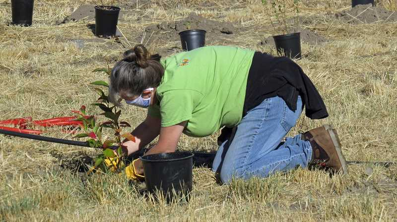 PHOTO COURTESY OF RON HALVORSON
