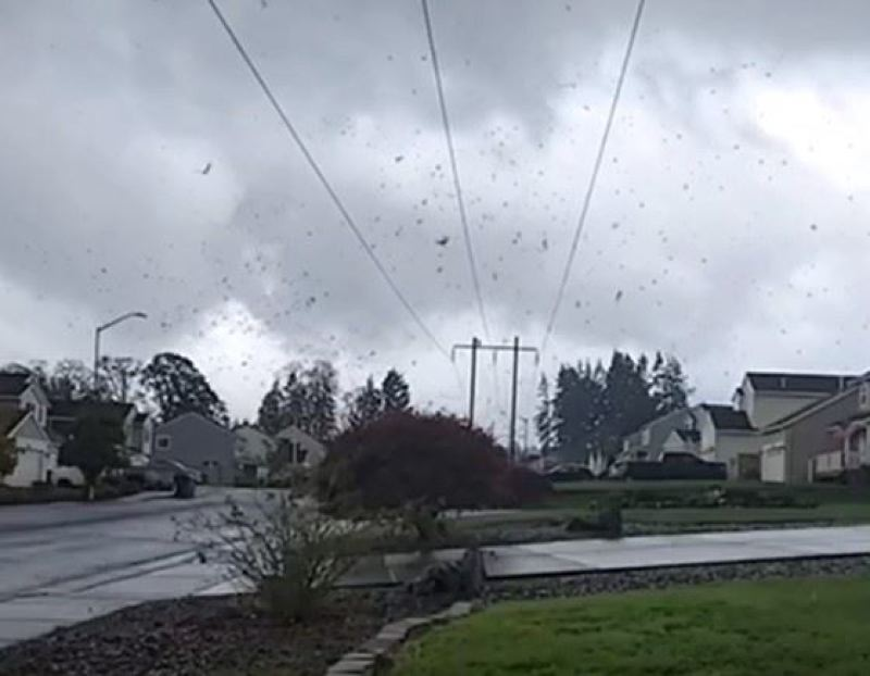COURTESY PHOTO: LESLIE JEAN - A still from a video captured in St. Helens shows heavy winds hitting the area.