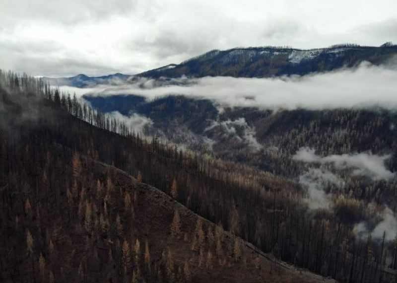 COURTESY PHOTO - A small plane crashed in this area of the Mt. Hood National Forest on Monday, Nov. 16.