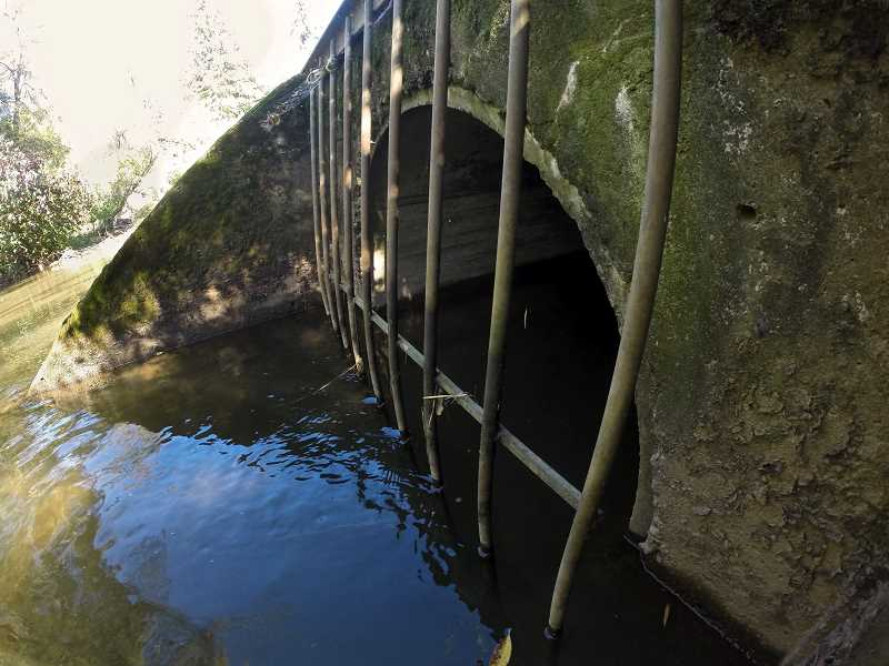 PMG PHOTO: JAIME VALDEZ - A sewer outfall is where toxic water flows from into Johnson Creek.