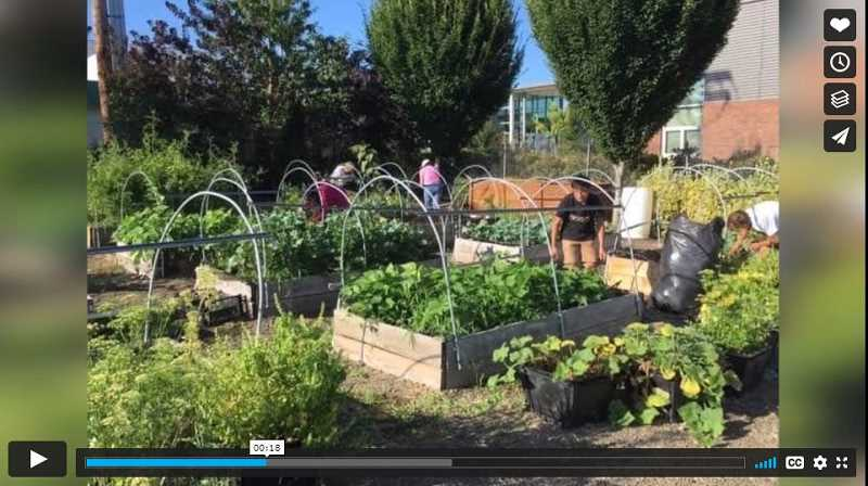 VIMEO - Canby FFA's video shows ag students working in the community garden, a project funded by the 'Living to Serve grant' from the National FFA organization.