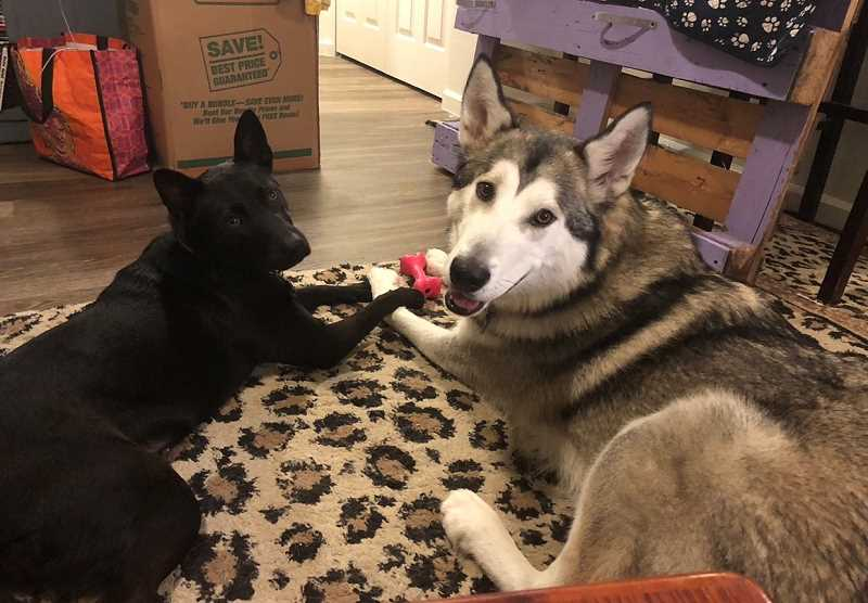 COURTESY PHOTO - Lladk is best friends with the family's other dog, Batty.