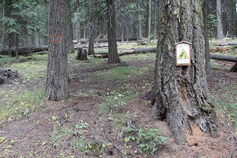 CENTRAL OREGONIAN - Portions of the Walton Lake area are closed to the public to protect people from falling trees.