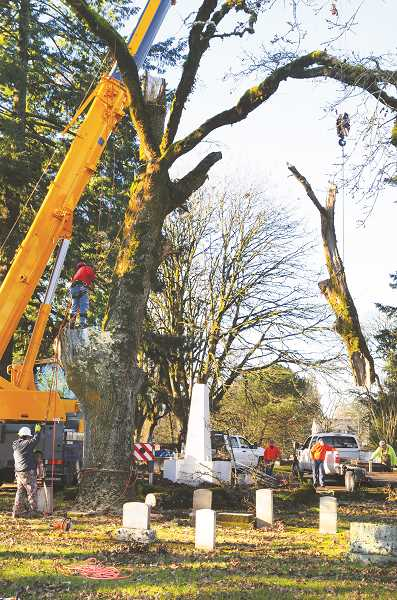 PMG PHOTO: GARY ALLEN - A local tree service and a crane company joined to carefully take down the tree in Newberg Friends Cemetery.