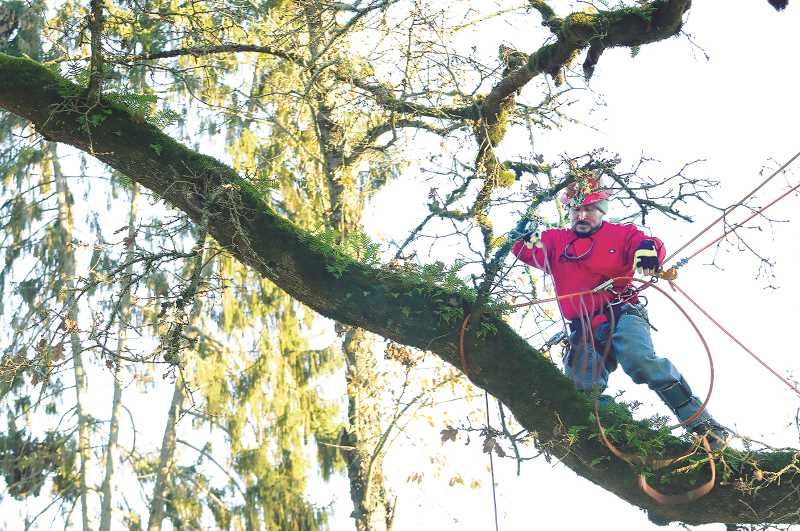 PMG PHOTO: GARY ALLEN - A tree feller secures one section of the tree before it is lowered to the ground by an immense crane on Dec. 4.