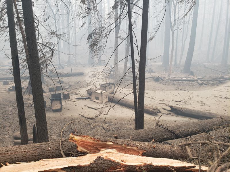 COURTESY PHOTO: U.S. FOREST SERVICE - Sunstrip Campground is pictured after the Riverside Fire.