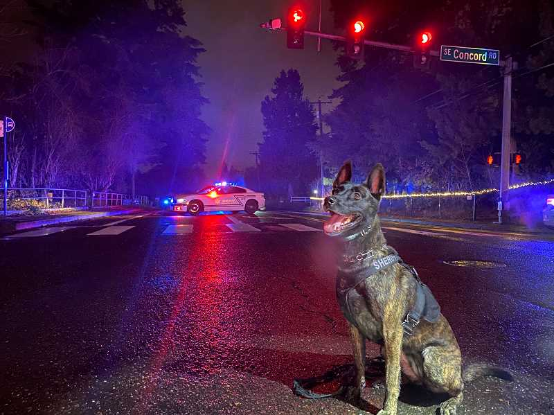 COURTESY PHOTO: CCSO - Sheriffs Office K9 Valli searched the area for anyone involved in the shooting who was hiding, but no victims or suspects were located.