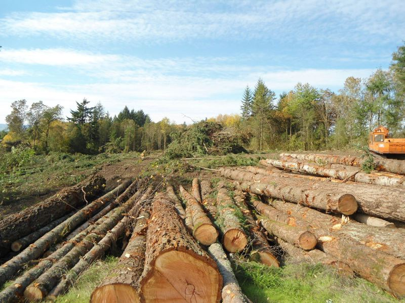PMG FILE PHOTO: - Washington County received $8.8 million from timber harvests on state-owned forestland in 2020.