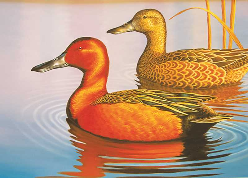 COURESY RENDERING: ODFW - The contest is broken down into three categories: Habitat Conservation Stamp, Waterfowl Stamp Contest and Upland Game Bird Stamp Contest.