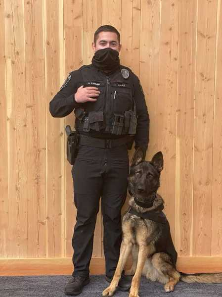 PHOTO COURTESY: OCPD - 18-month-old Czech shepherd Ronnie recently completed seven weeks of obedience school, scent work and apprehension training, working alongside Officer Alan Farmer.