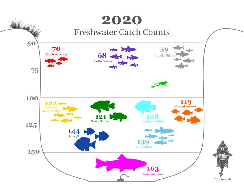 COURTESY GRAPHIC: LUKE OVGARD - Rainbow trout, bluegill and gulf killifish were the three most abundant freshwater catches for Ovgard in 2020.