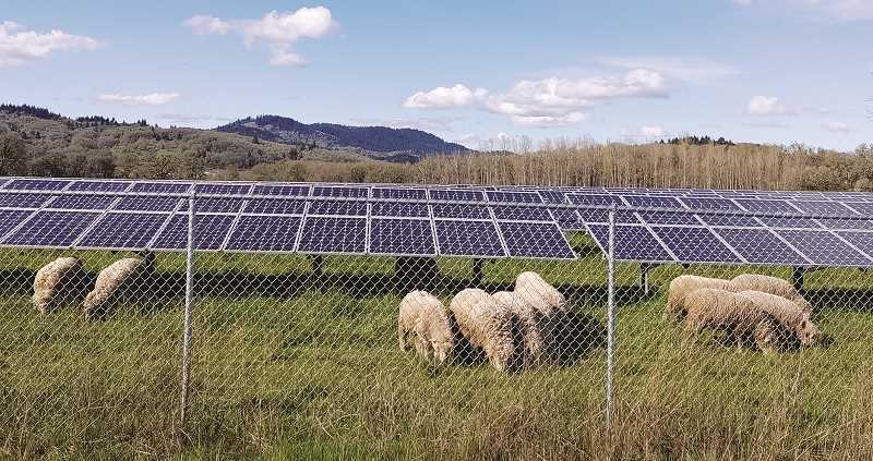 COURTESY PHOTO: OSU - A study by Oregon State University researchers has determined that working farms that also host solar facilities could satisfy 20% of the future electricity demand in the United States, all at a cost that is a fraction of the country's annual budget.