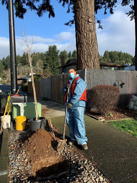 COURTESY PHOTO: CITY OF GRESHAM - The Gresham Tree Team will be planting and maintaining trees in the Rockwood, Wilkes East and North Gresham neighborhoods, in partnership with Multnomah County Office of Sustainability and Friends of Trees.