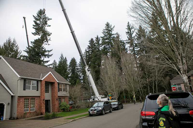 PMG PHOTO: JAIME VALDEZ - Becky Sutton, who lives on Southwest 100th Drive in Tualatin, watches as a crane removes a portion of a damaged Douglas fir tree in back of her home in a forested area just off of Alsea Court Monday, Jan. 18.