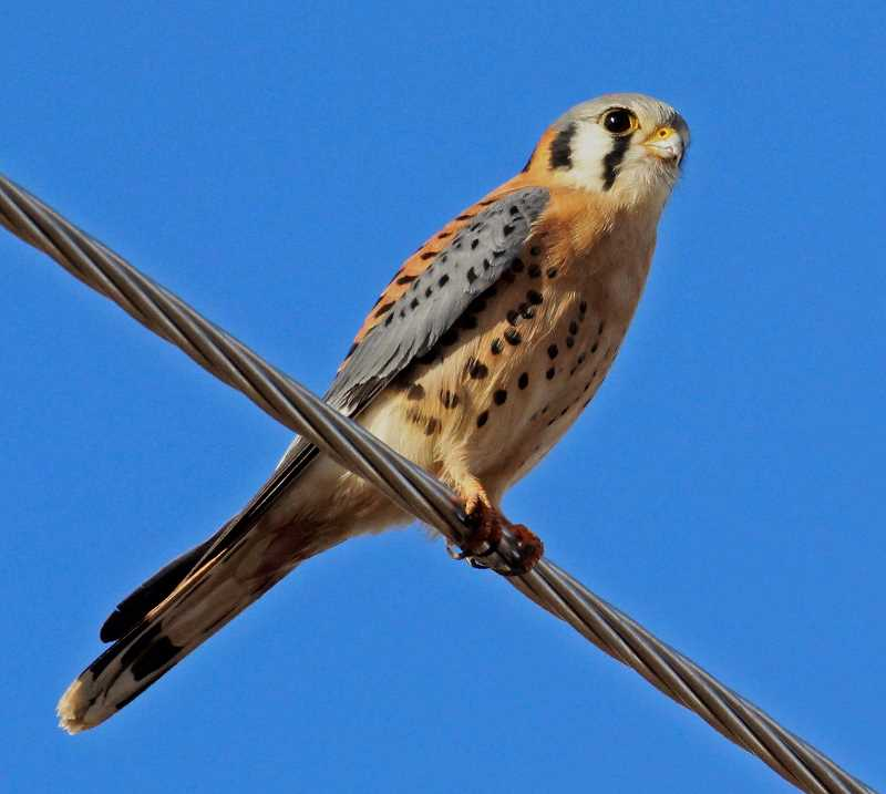PHOTO SUBMITTED BY RON HALVORSON