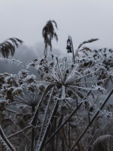 COURTESY PHOTO: ANDREAS HAIMERL FOR UNSPLASH - Some agencies and activities close in Gresham area because of predicted snow and ice.