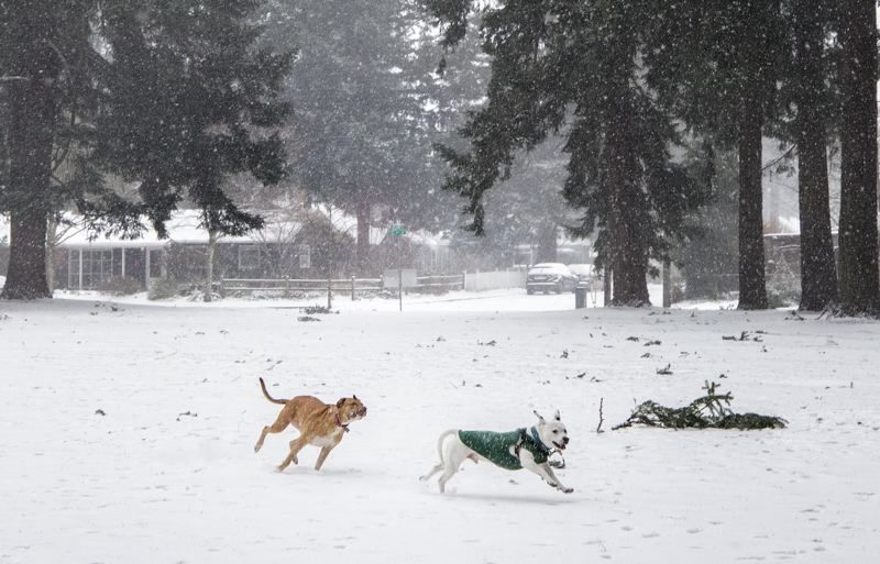 PMG PHOTO: JONATHAN HOUSE - Dogs enjoy the frest coat of snow at Mt. Scott Park.