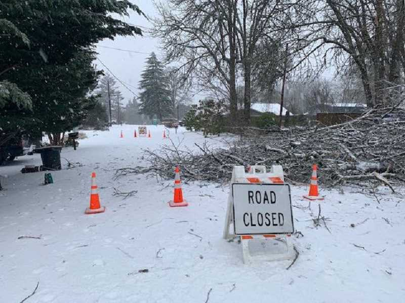 COURTESY PHOTO: CITY OF TIGARD - A tree and branches closed Ventura Court Saturday morning. Work crews were waiting for PGE to shut off power so they could clear the street.