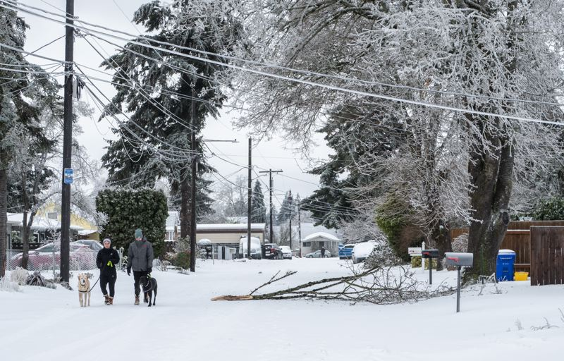PMG PHOTO: JONATHAN HOUSE - Portland woke up to downed branches and icy power lines Saturday morning.