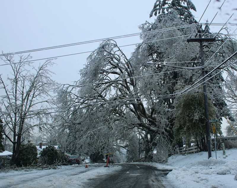 PMG PHOTO: J. BRIAN MONIHAN - Trees were weighed down with snow and ice on Summit Street.